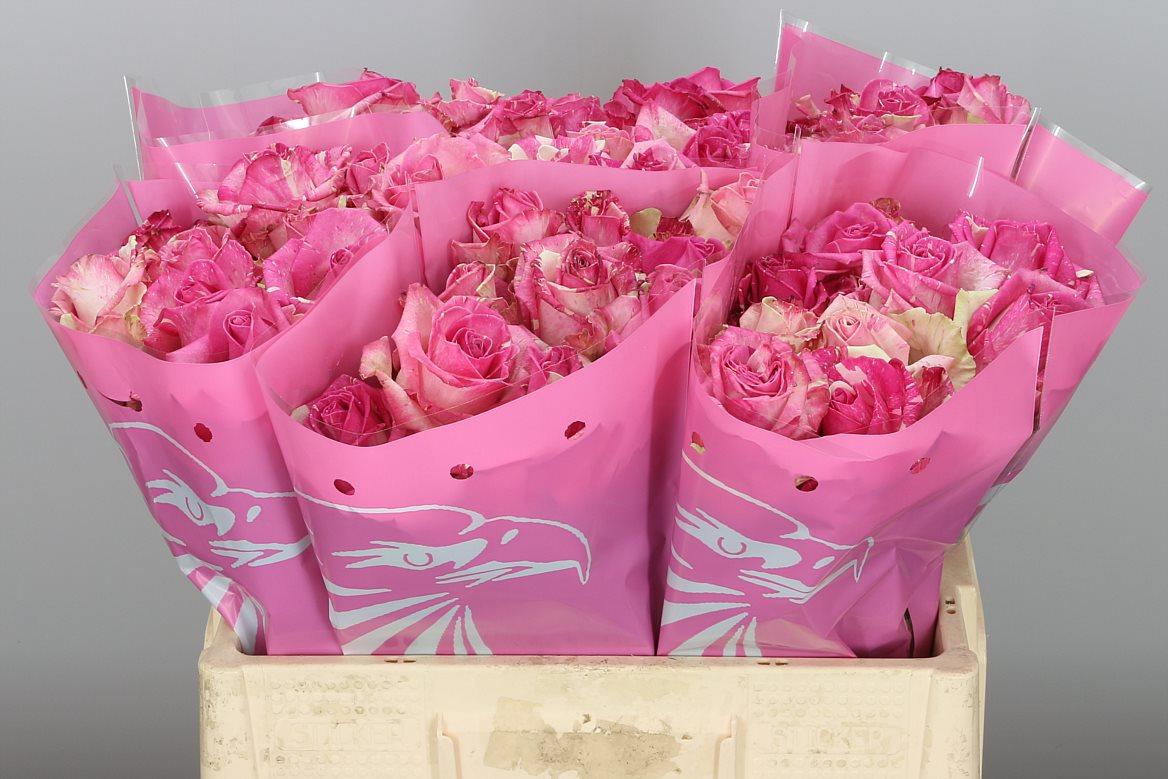 Pink Roses (40) Stems.Super Week Offer Only 29,99€